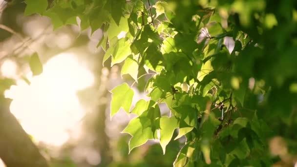 A fény süt a levelekre, és a szél lassan fúj. Nyáron meleg van..