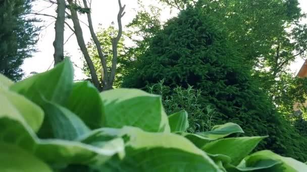 Borovice v parku