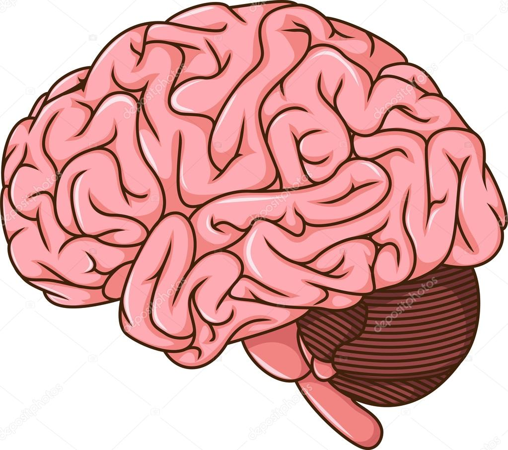 human brain cartoon � stock photo 169 starlight789 126601770