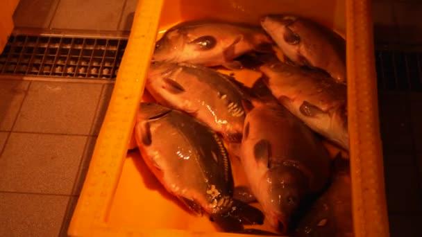 Živé Evropské kapry v žluté nádobě z plastu na rybí trh