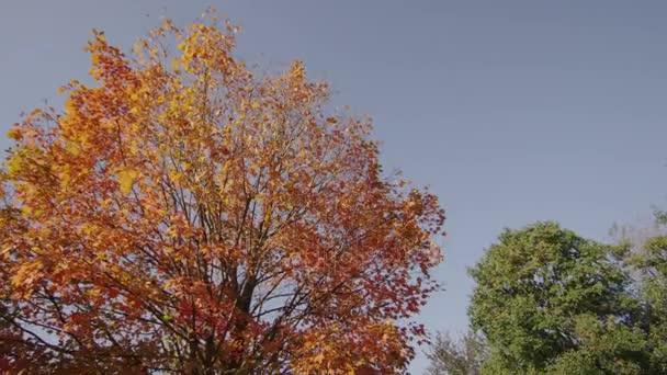 Fall Tree Tilt Down 1