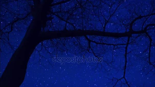 Silueta stromu s noční obloha časová prodleva