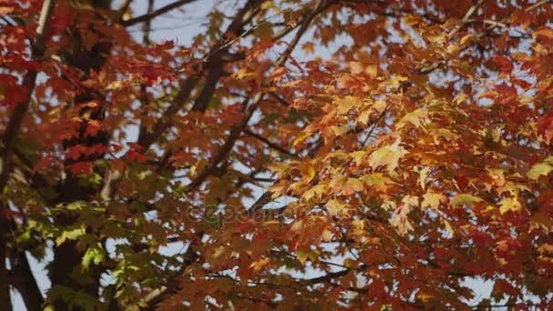 Fall Leaves B Roll 1