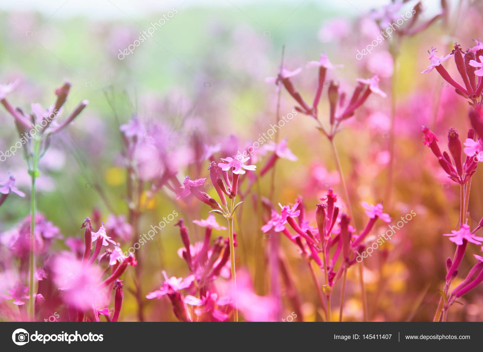 Abstract dreamy photo of spring wildflowers stock photo tomert abstract dreamy photo of spring meadow with wildflowers photo by tomert mightylinksfo