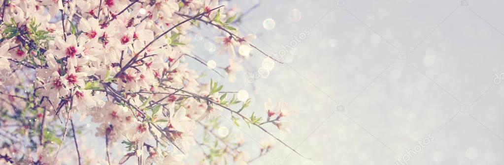 website banner background of of spring white cherry blossoms tre