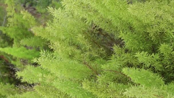 Zöld levelek fújnak a szélben. Kilátás a zöld levél és textúra növekvő napfény. Közelítsük meg a természet mozgó képét. Természetes növényzet környezet. Használat háttérként vagy tapétaként.