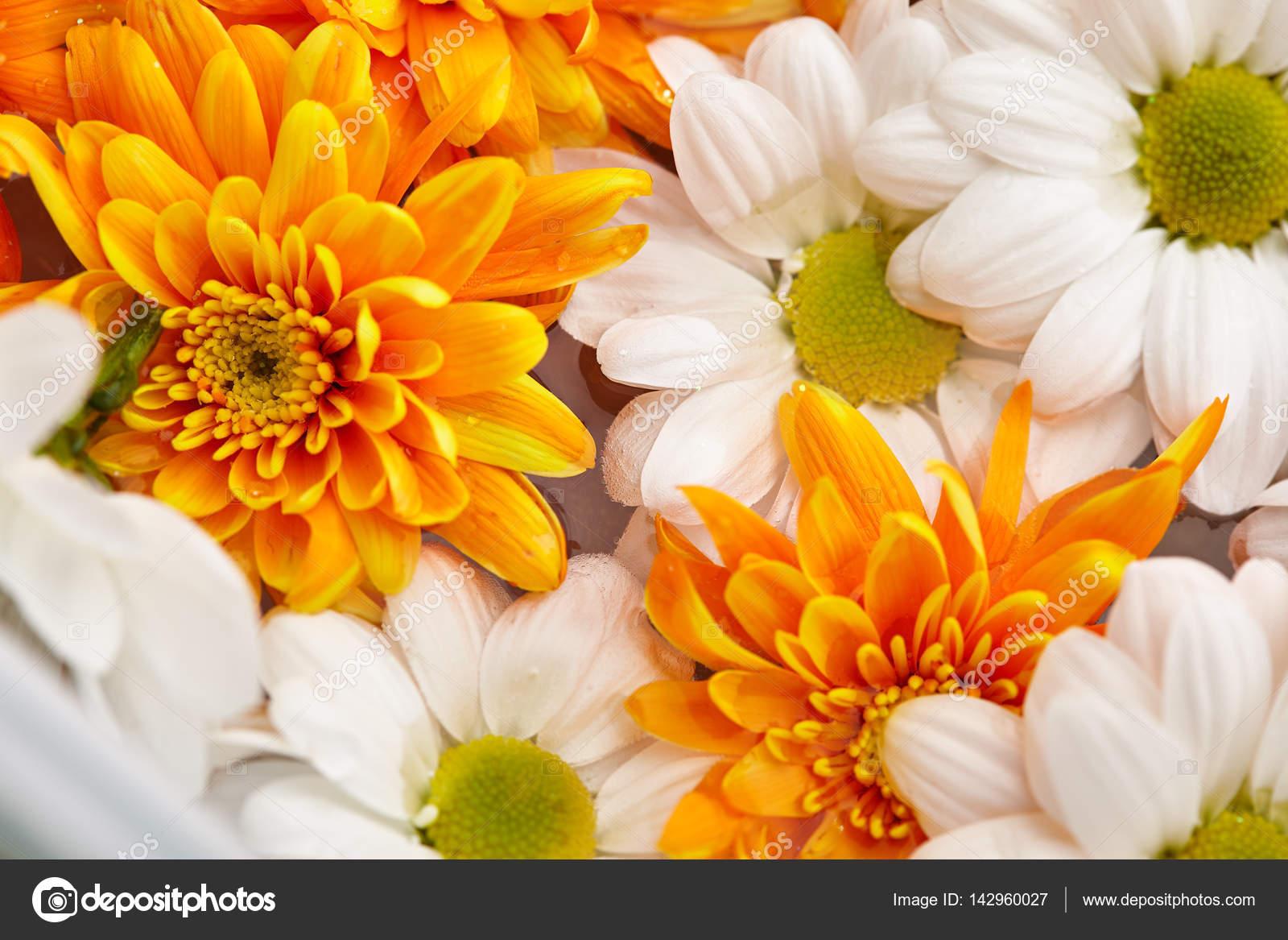 White And Orange Flowers Pattern Stock Photo Ryzhkov86 142960027
