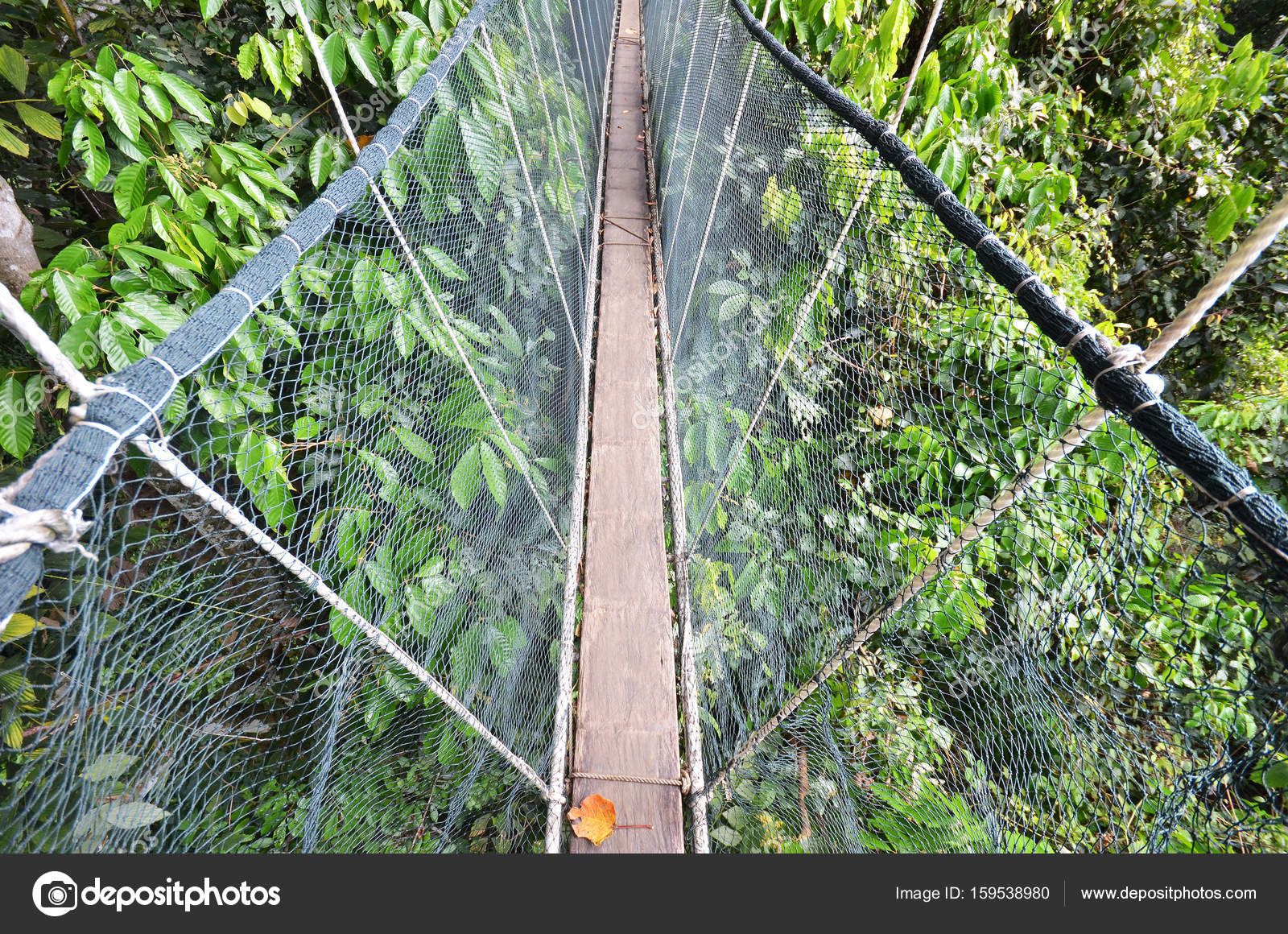 Poring Treetop Canopy Walk u2014 Stock Photo & Poring Treetop Canopy Walk u2014 Stock Photo © tang90246 #159538980