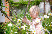funny little girl, baby in the chamomile field