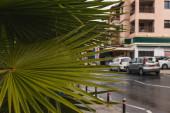 szelektív fókusz zöld és friss levelek közelében épület