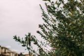 Fotografie selektivní zaměření zelených listů na větve proti zatažené obloze