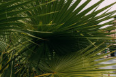 tropical and green palm leaves in summertime