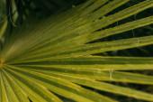 zblízka mokré a zelené palmové listy