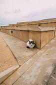 roztomilý a nadýchaný kočka v blízkosti staré budovy
