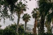 zöld pálmafák a modern ház közelében a felhős ég ellen