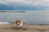 Fotografie Niedliche Katze liegt am Boden nahe dem Mittelmeer