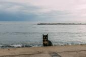 Fotografie Niedliche Katze sitzt am Boden in der Nähe des Mittelmeeres