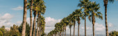 Fotografie panoramic shot of promenade alley with green palm trees against blue sky