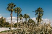 a zöld pálmafák szelektív fókusza a kék ég ellen