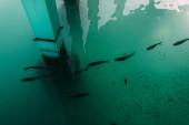 pohled shora na tmavé ryby plavající ve středozemním moři