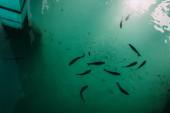 top view a halak úszás mediterrán tenger