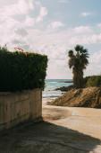 green plants and palm tree near sandy beach and mediterranean sea