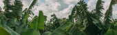 Fotografie panoramic shot of green palm leaves against sky