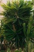 green leaves of palm tree near cactus