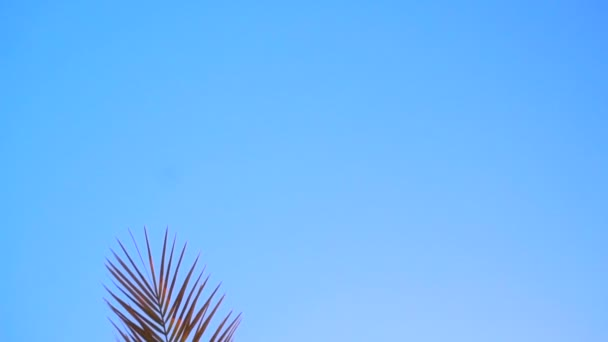 large branches of Palm trees against the blue sky and sunlight