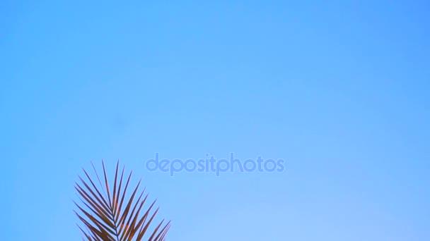 nagy ága a pálmafák, a kék ég és a napfény ellen