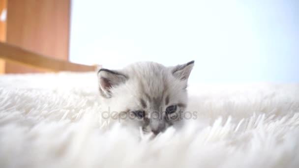 kis cica, a puha ágy