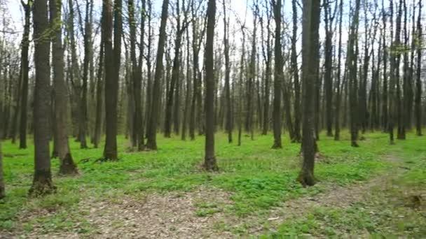 erdei fák levélzet nélküli