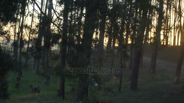 krásný les západ slunce