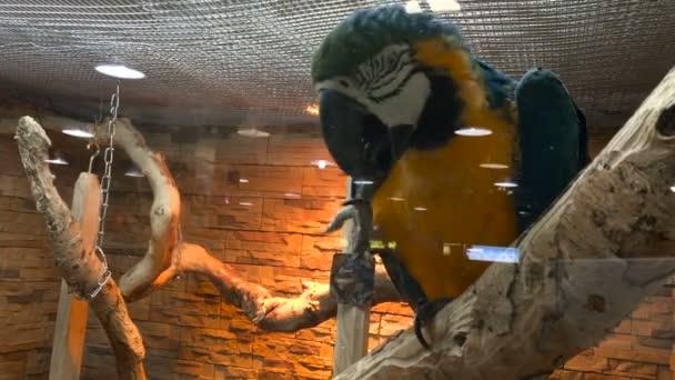 velké krásné papoušek Ara