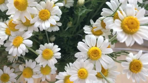 krásné letní květy heřmánku