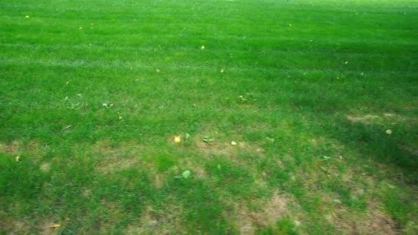 Zelený trávník se stromy