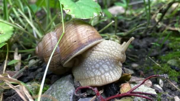 close-up of a snail eats