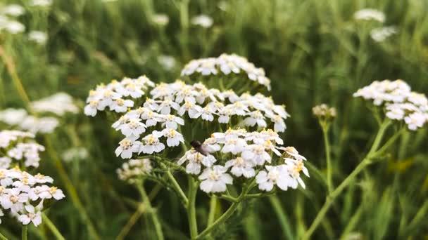 Gyönyörű fehér virág.