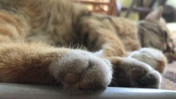 nagy cica, puha mancsok alszik