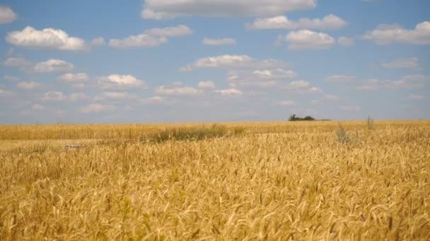 Krajina pšeničná pole a modrá obloha s mraky