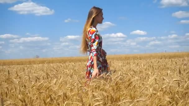 charming girl in plte walks through the wheat field