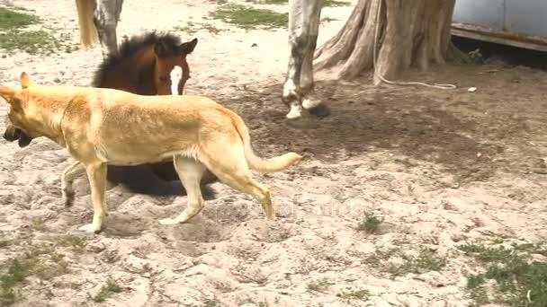 pes běží poblíž poblíž koně