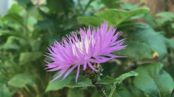Detail venkovní fialový květ