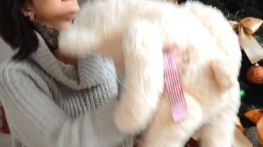 charming brunette plays Teddy bear near the Christmas tree at home