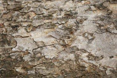 Wooden Bark Texture Background Pattern Wallpaper Close up