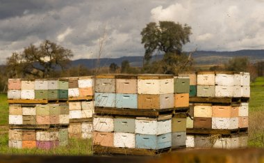 Beekeeper Boxes Bee Colony Farm Field