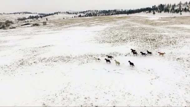 Herd of Horses Running Wild Stallions Equestrian Animals
