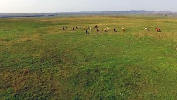 Divocí koně přejet zelené země krajina jezdecká zvířata