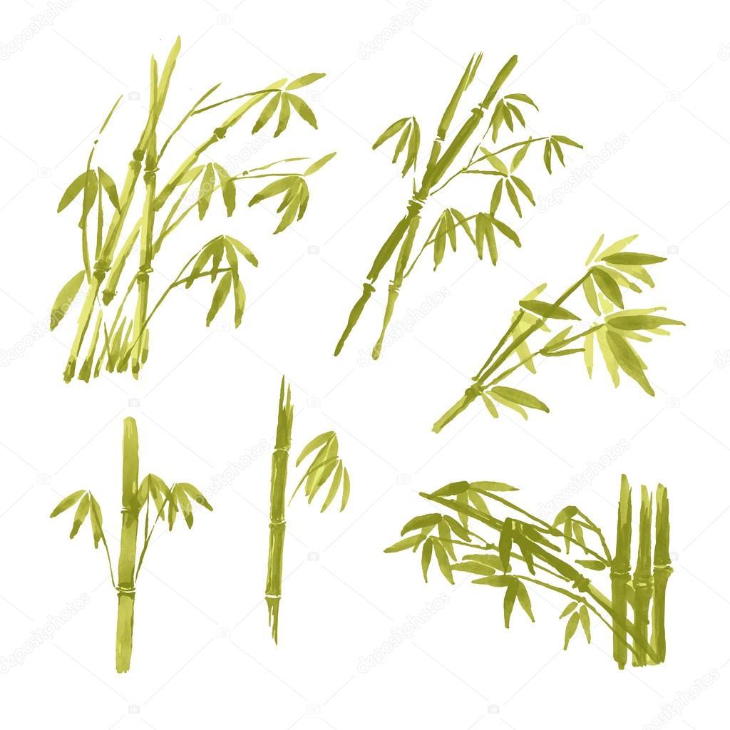 Aquarell Malen Bambus Isoliert Auf Weissem Hintergrund Stockvektor