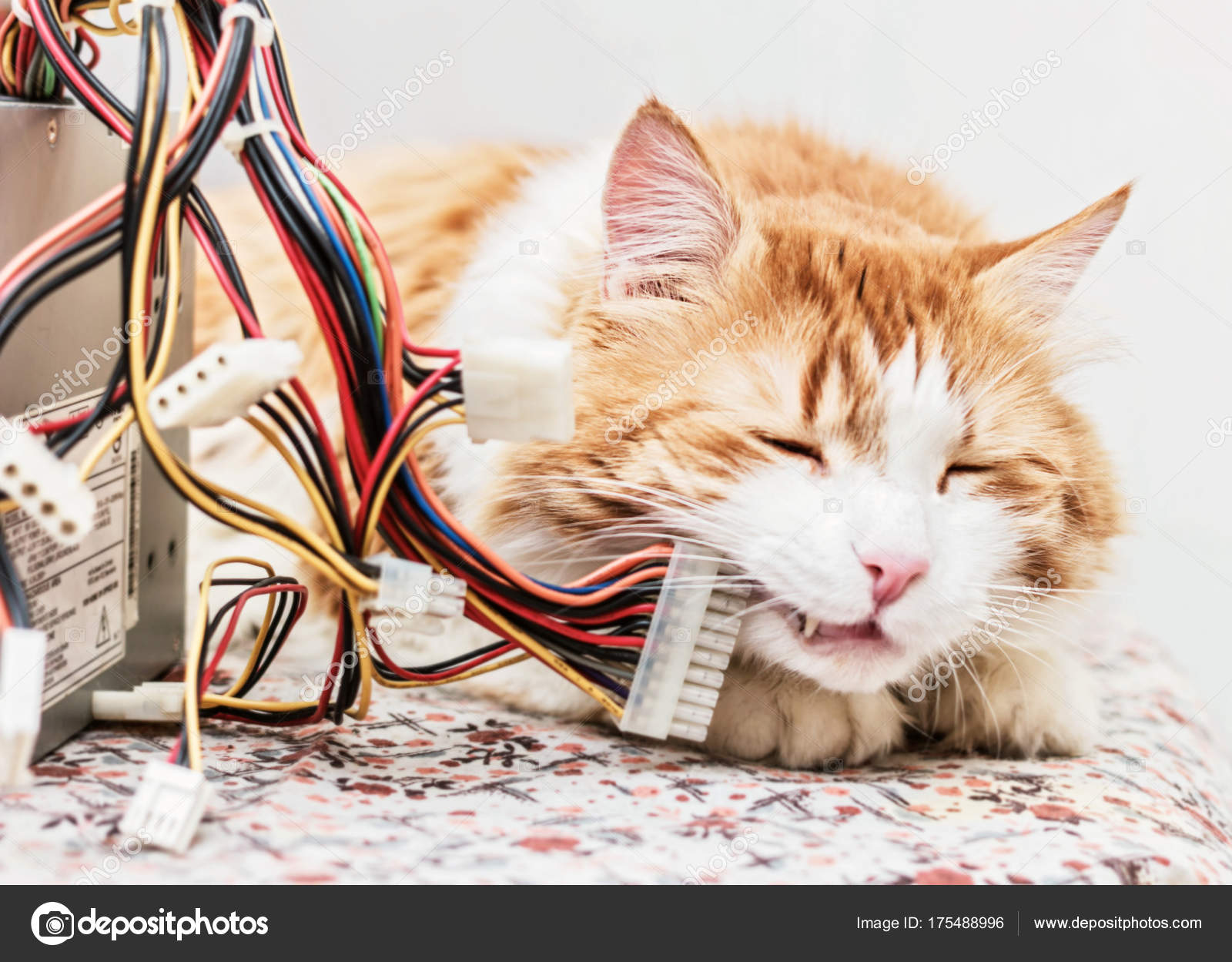 Cat and computer wires — Stock Photo © dashabelozerova #175488996